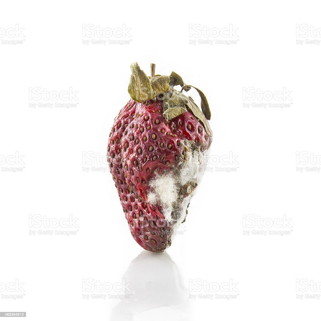 rotten strawberry stock photo