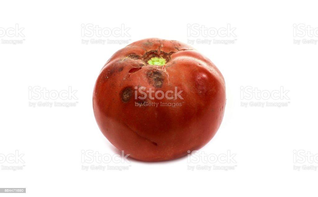Faule Tomaten isoliert auf weißem Hintergrund – Foto