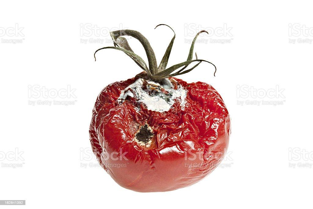 Rotten Tomato stock photo