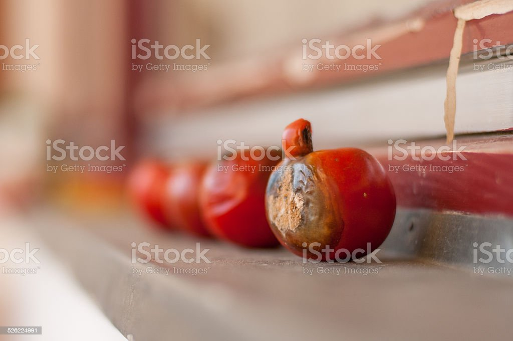Rotten Tomatoes On The Windowsill Stock Photo & More