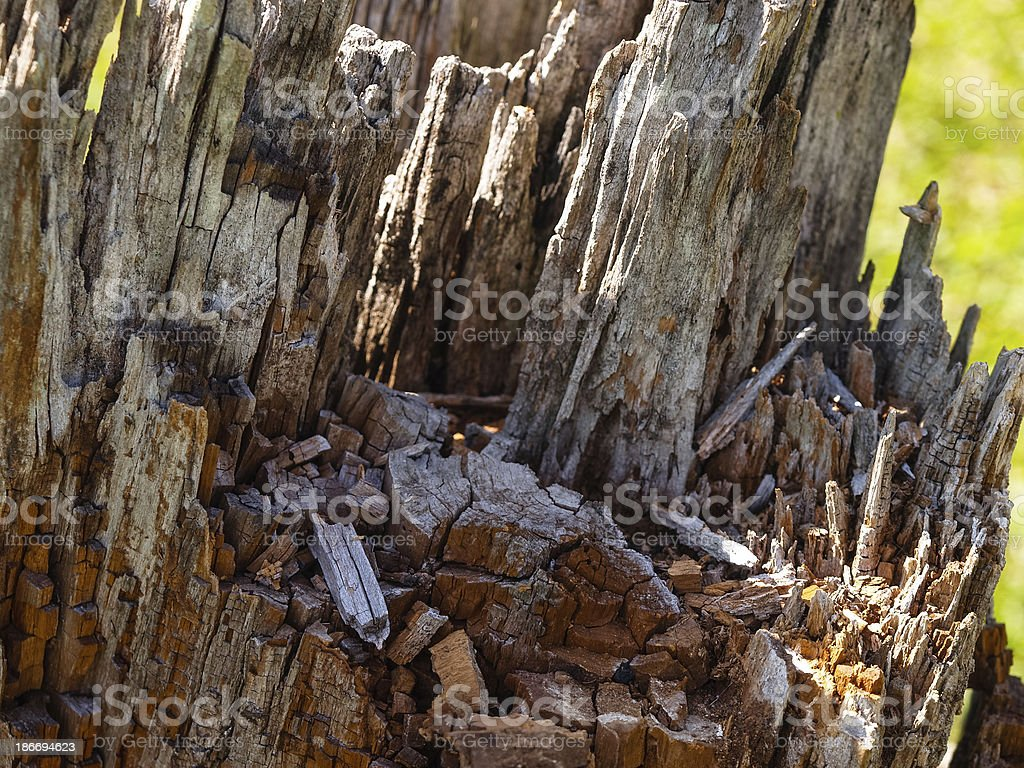 Rotten tree stump. Flora in Paraguay, South America stock photo