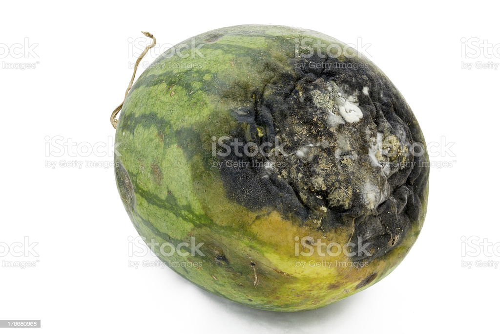 Rotten watermelon. stock photo