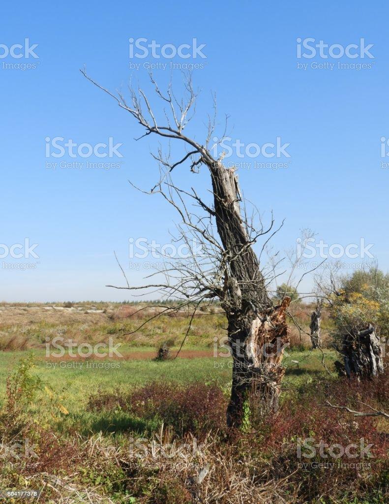 Rotten wood 2 royalty-free stock photo