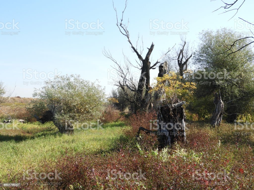 Rotten wood 3 royalty-free stock photo