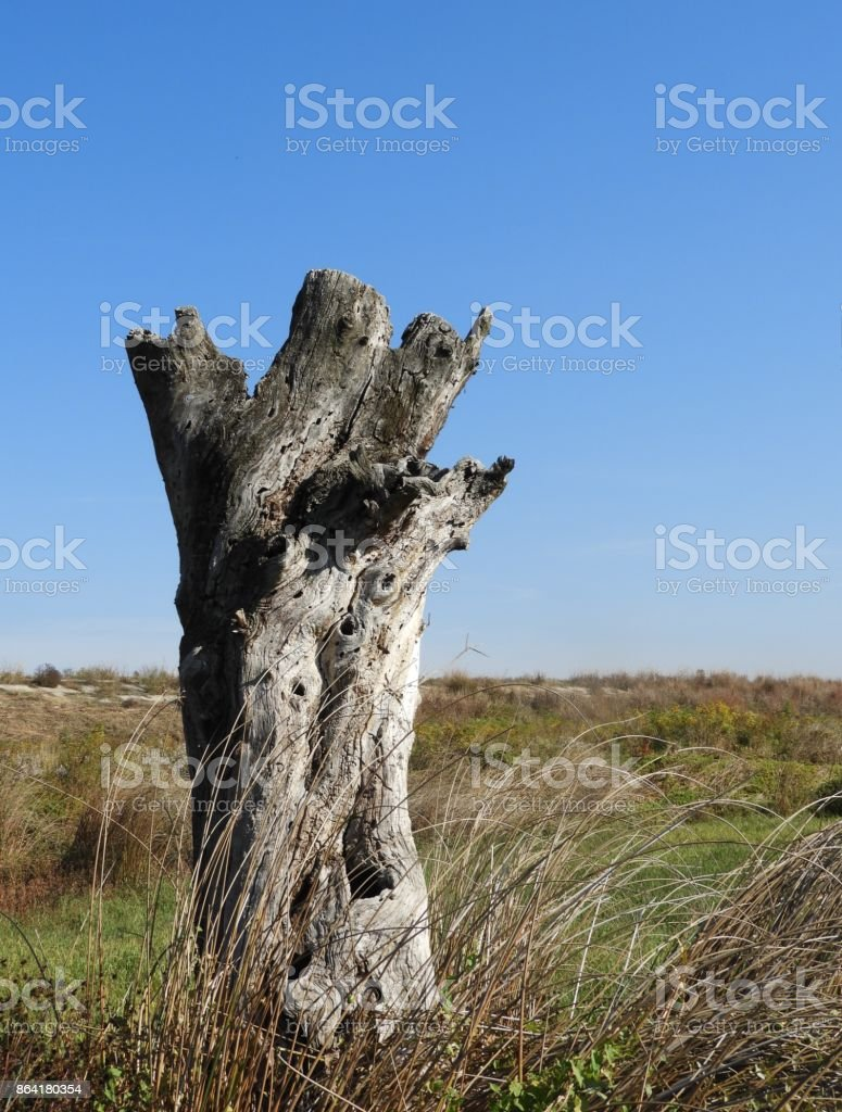 Rotten wood 4 royalty-free stock photo