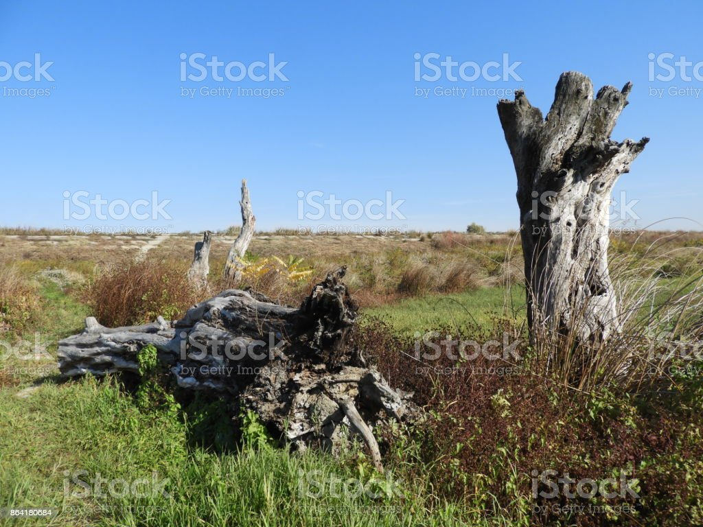 Rotten wood 5 royalty-free stock photo
