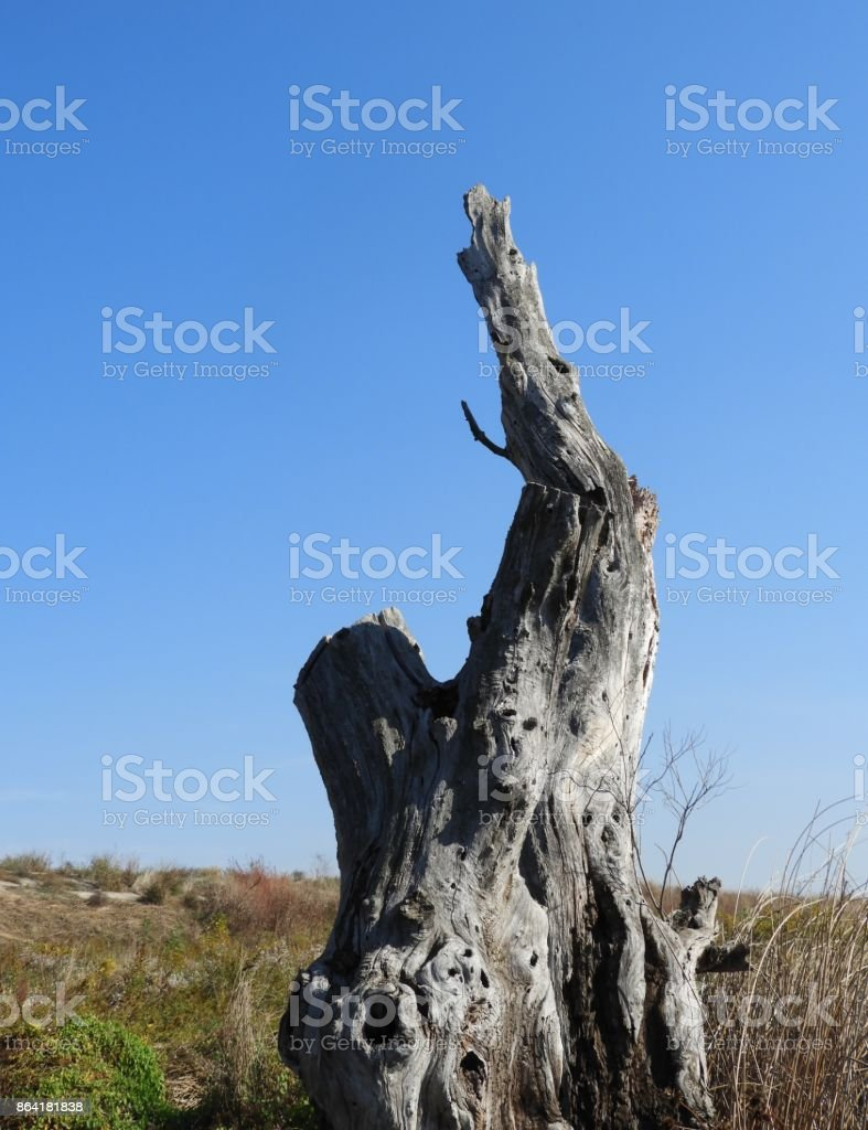 Rotten wood 6 royalty-free stock photo