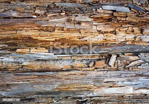 Rotten wood close up and its rotten splinters.