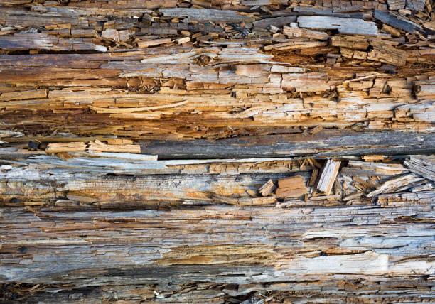 腐った木を閉じるとその腐った破片 - 腐敗 ストックフォトと画像