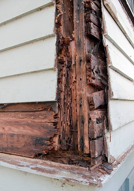 rotten wood - termite stock photos and pictures