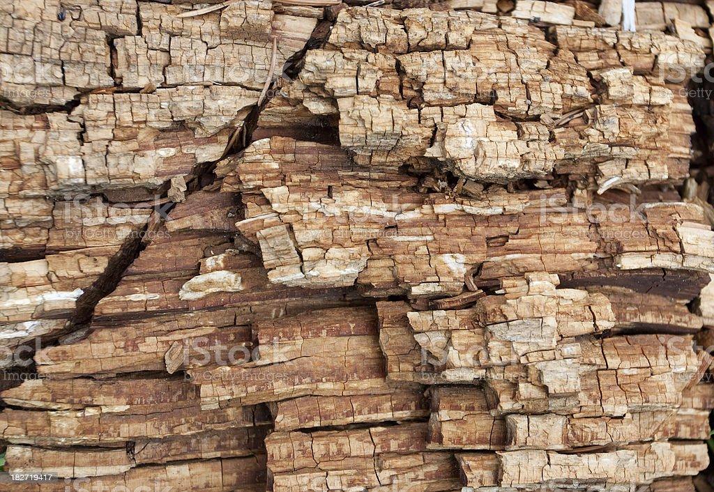 Rotten Wood royalty-free stock photo