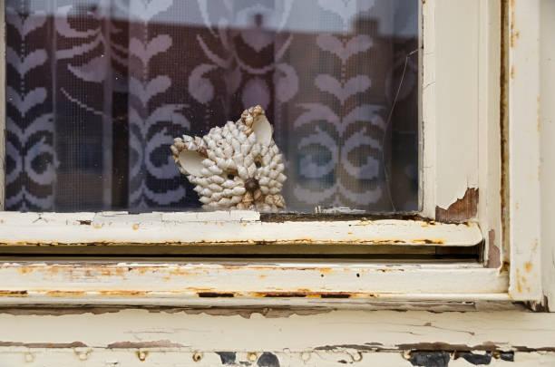morsche holzfenster - bemalte muscheln stock-fotos und bilder