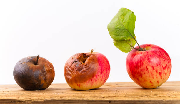 Rotting apple process Rotting apple process rotting stock pictures, royalty-free photos & images
