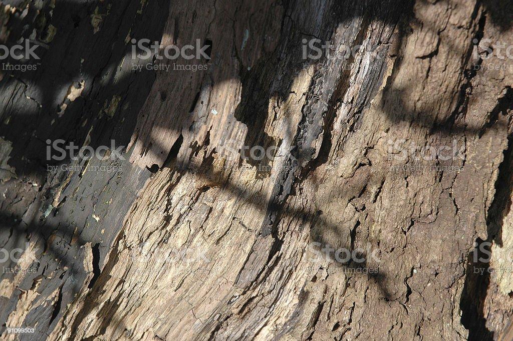 Rotting Bark royalty-free stock photo