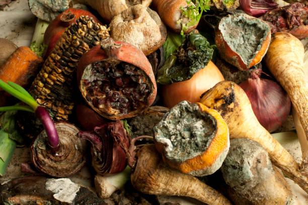 ruttnande frukt och grönsaker - food waste bildbanksfoton och bilder