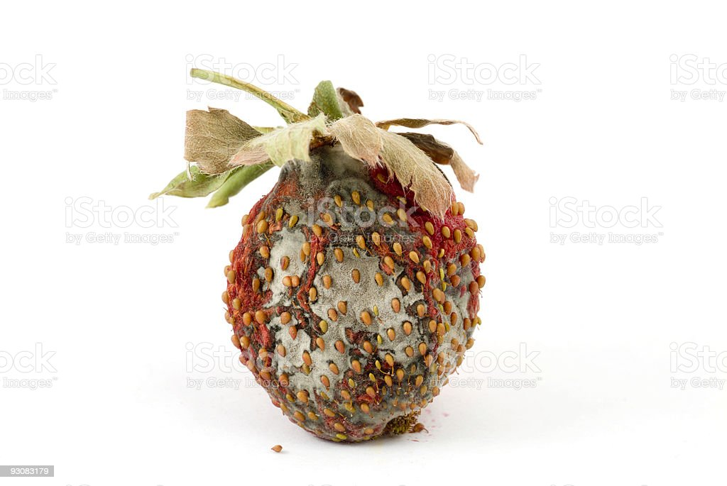 Rotting Strawberry royalty-free stock photo
