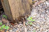 istock Rotting Timber Retaining Wall 1277918033