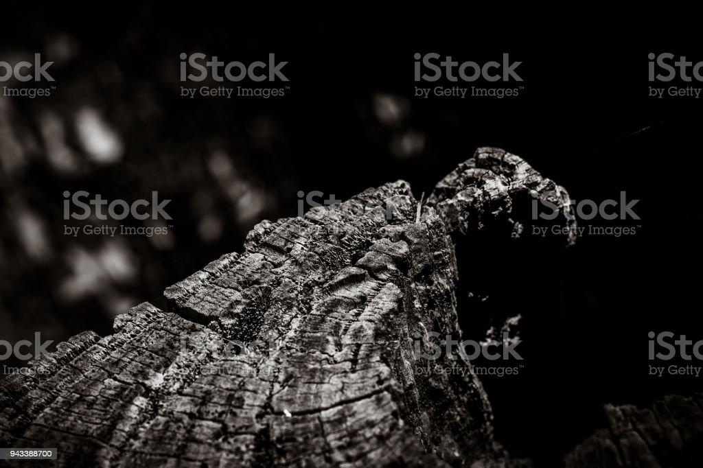 Rotting tree stump stock photo
