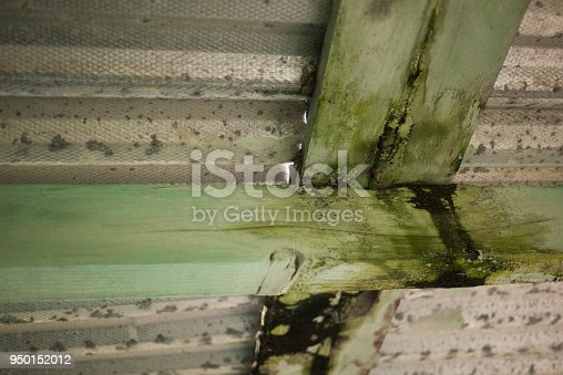 Rotting green wooden roof beams supporting corrugated metal roof. Shot in Maui, Hawaii.