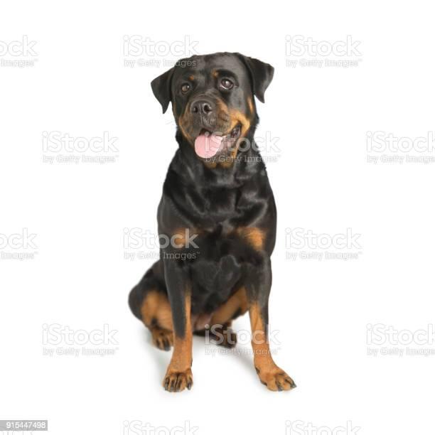 Rottweiler guard dog picture id915447498?b=1&k=6&m=915447498&s=612x612&h=g2c e4bevnx4j8183hwps3xyne47vsiwcd3ju3apcu4=
