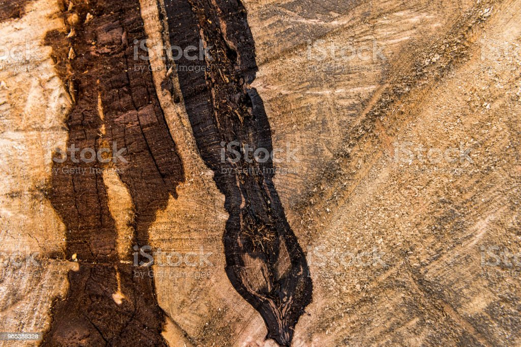 Rough background of detailed wooden surface royalty-free stock photo