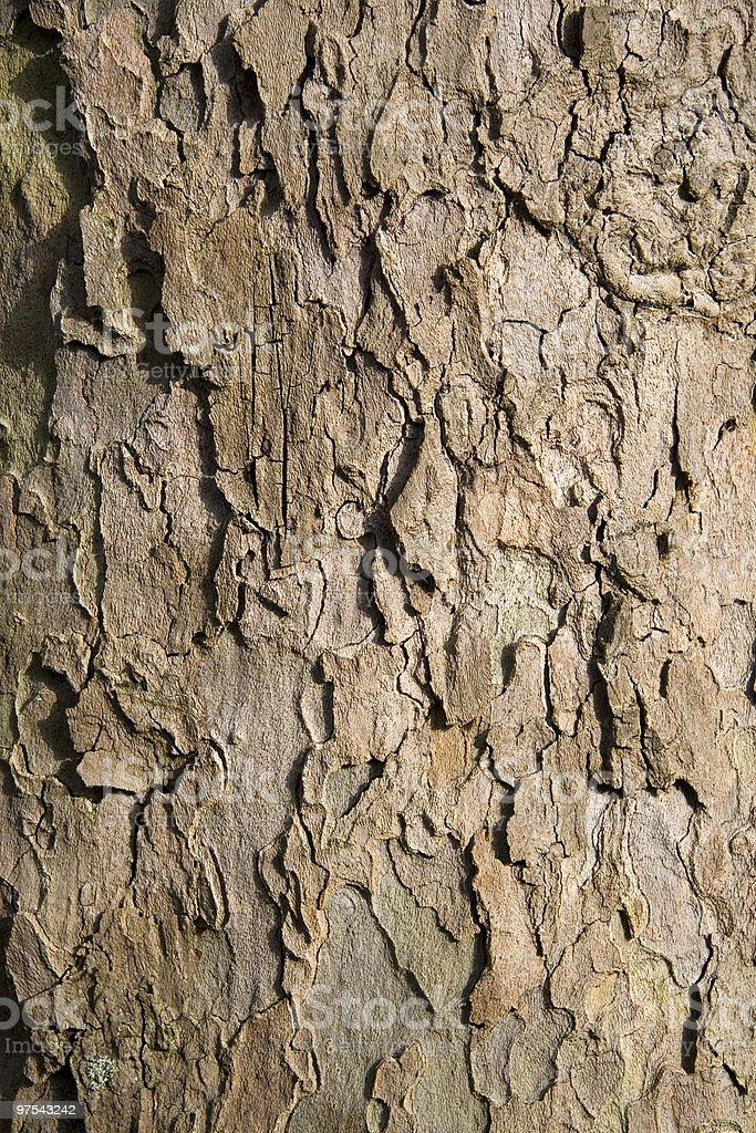 Rough bark texture royalty-free stock photo