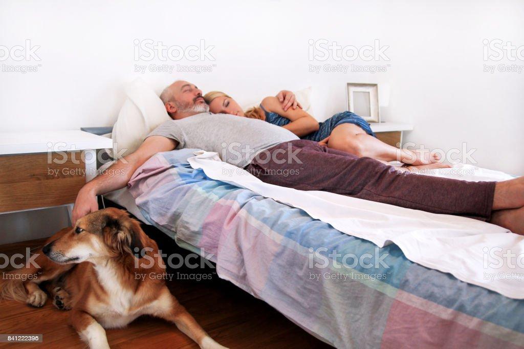 Rough collie cão é mentir perto da cama e descansando na manhã, enquanto os donos dele estão dormindo na cama no quarto. Felicidade do jovem casal desfrutando com seus cães em casa. foto royalty-free