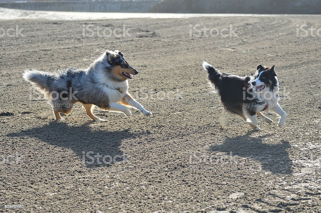 Collect /'N Play Rough Collie