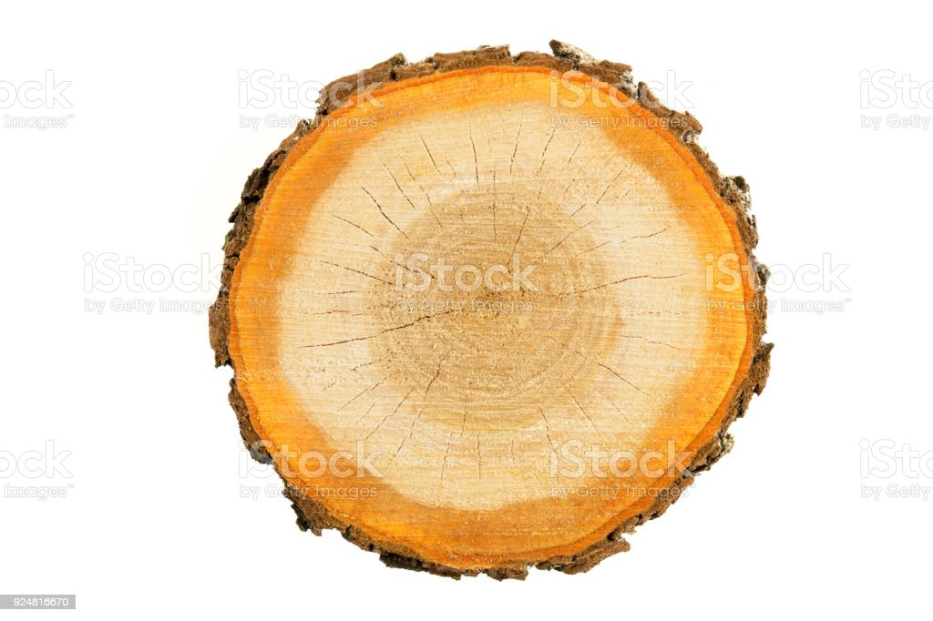 Rough (chainsaw) cut wood slice isolated on a white background. stock photo