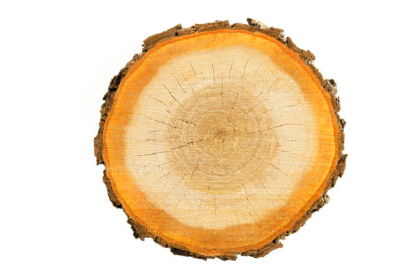 Rough (chainsaw) cut wood slice isolated on a white background. Nature backgrounds series. log stock pictures, royalty-free photos & images