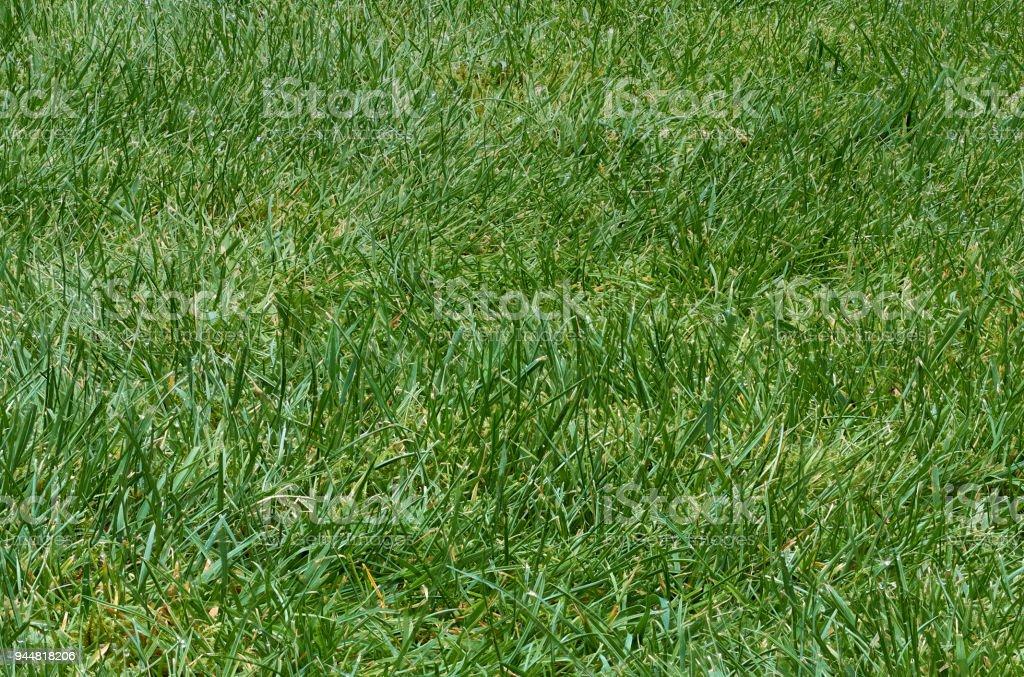 Rough Gras – Foto