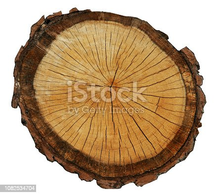 rough pine circle cut isolated on white background