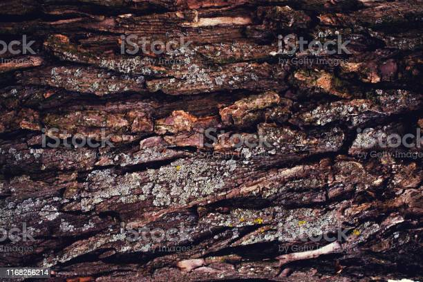 Photo of Rough texture of the old tree bark.