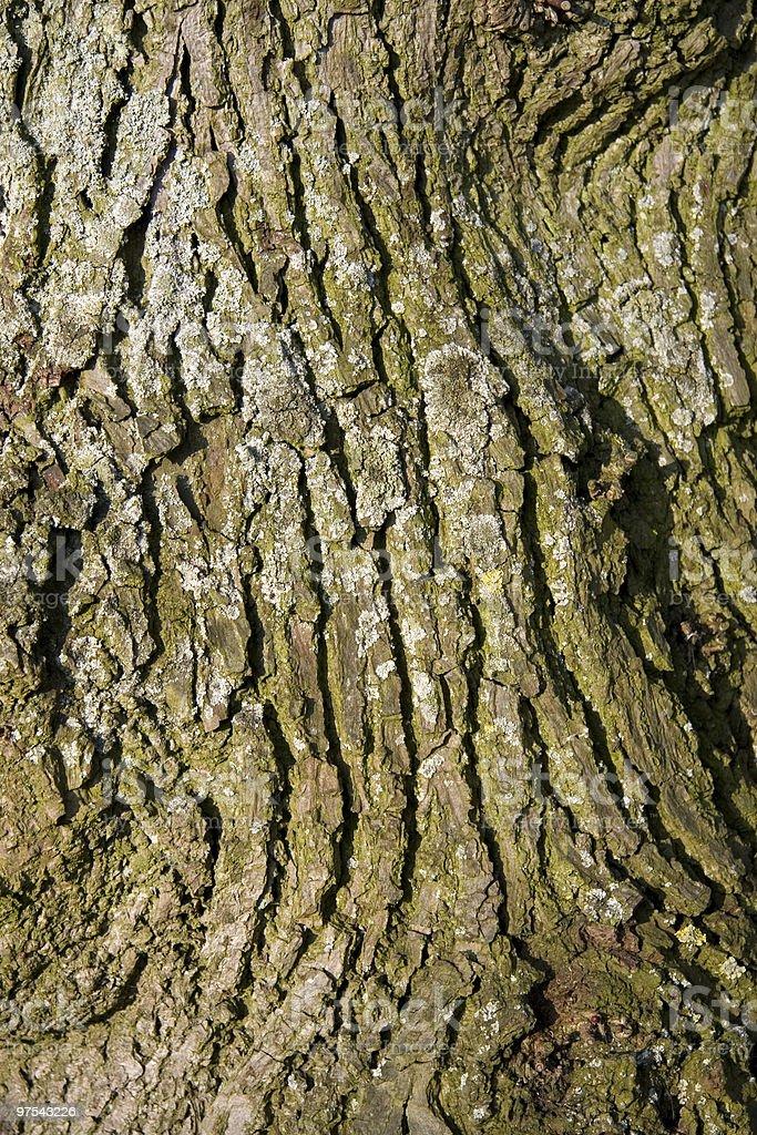 Rough tree bark texture royalty-free stock photo