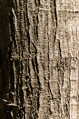 Rough Tree Trunk Texture