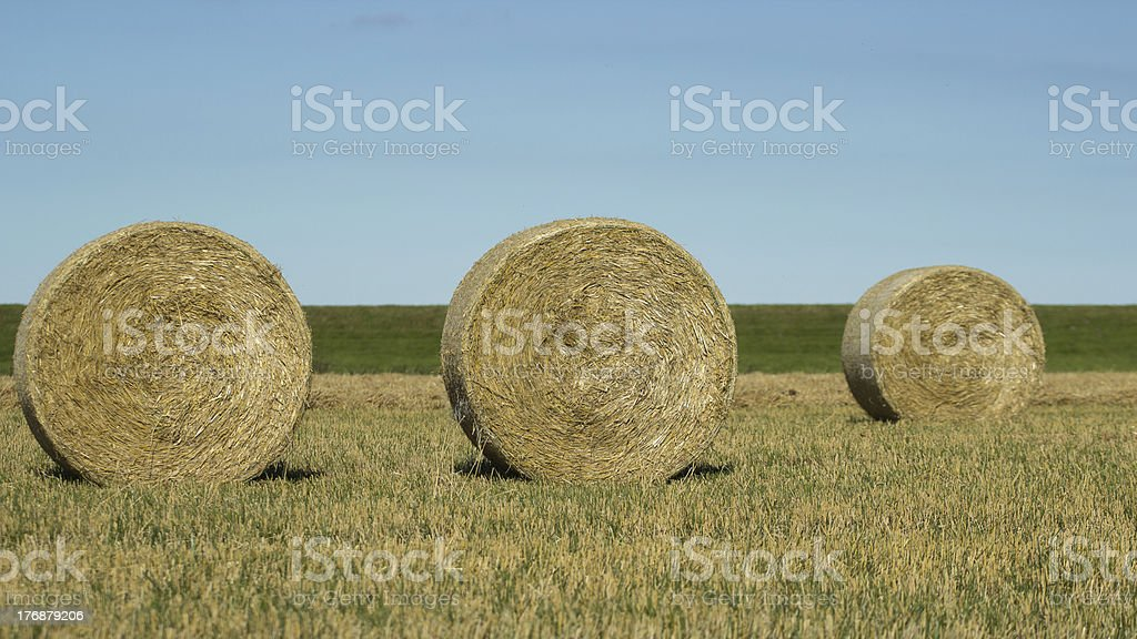 Round bales of hay in the field royalty-free stock photo