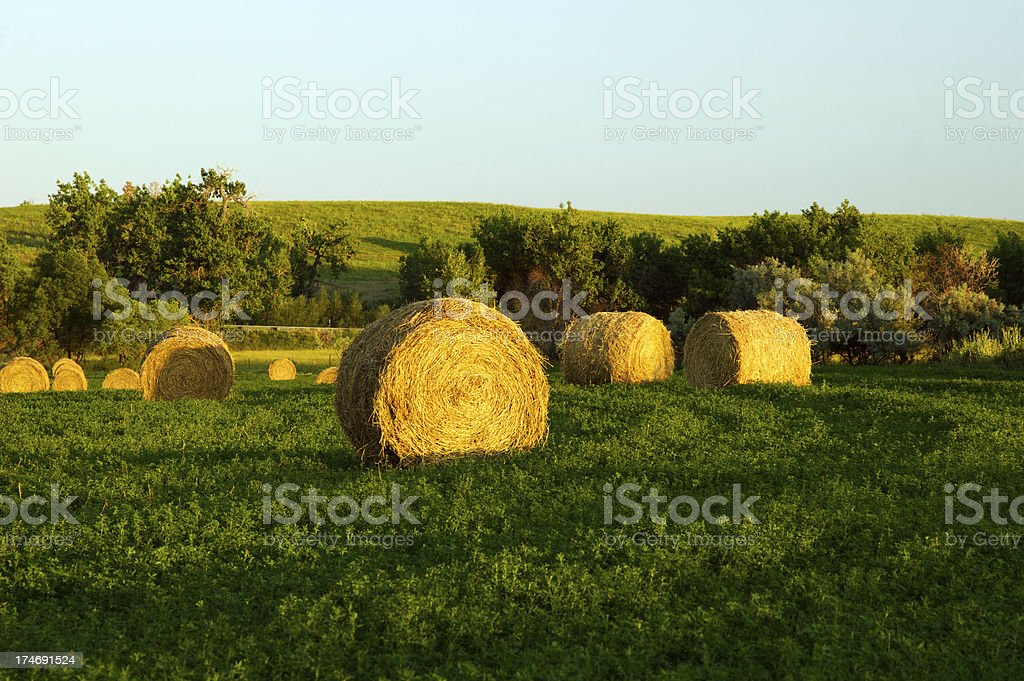 Round Bales of Hay royalty-free stock photo