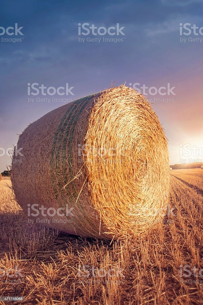 Round bales of straw royalty-free stock photo