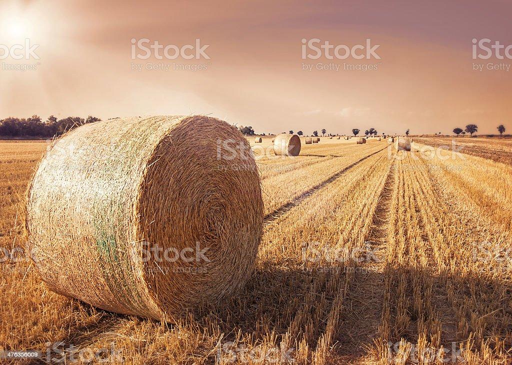 Round bales of straw royalty-free stock photo