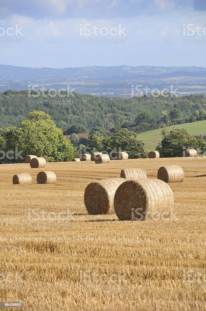 Round Bales royalty-free stock photo
