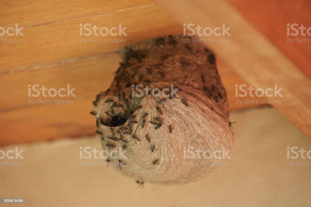 Round bee nest stock photo