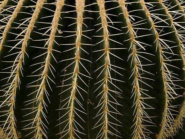 Round Cactus stock photo