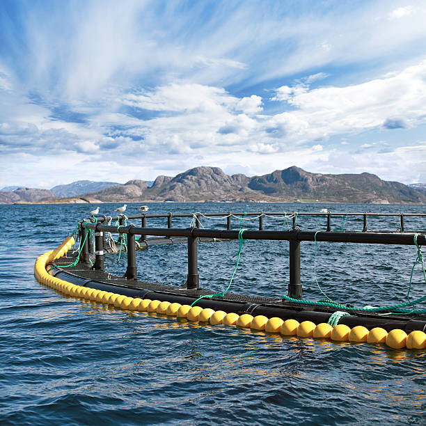 round fish farm cage in norwegian sea - aquaculture stock pictures, royalty-free photos & images