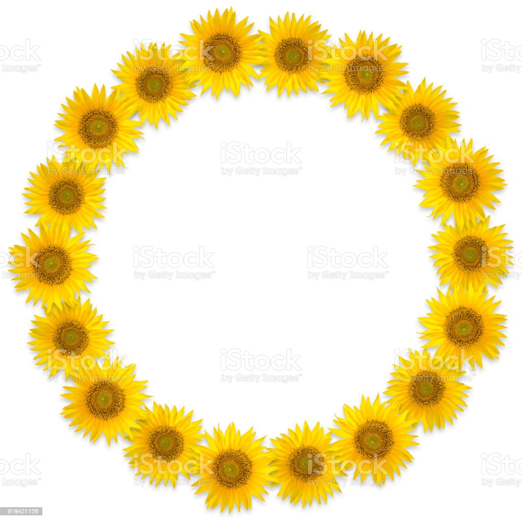 Round Frame Of Sunflower Flowers On A White Background Flower Wreath