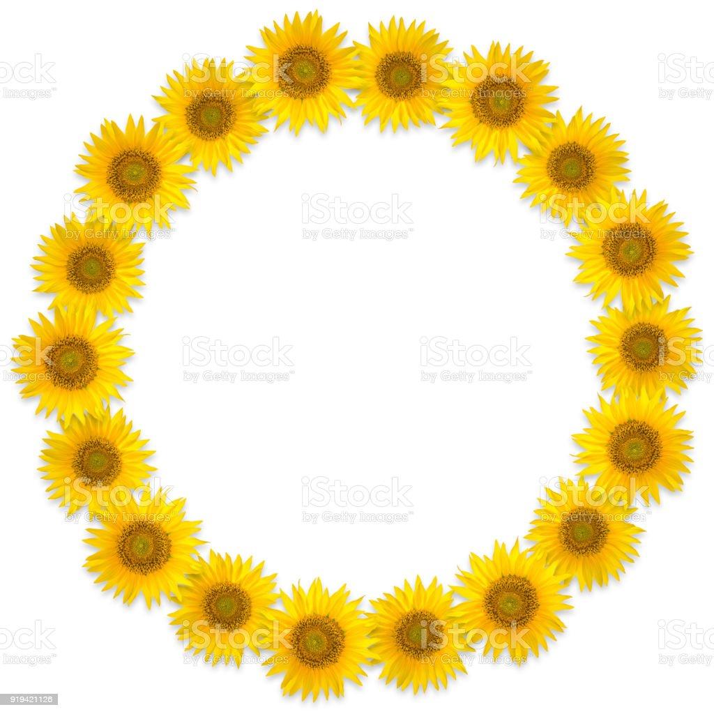 Round frame of sunflower flowers on a white background flower wreath round frame of sunflower flowers on a white background flower wreath royalty free stock mightylinksfo