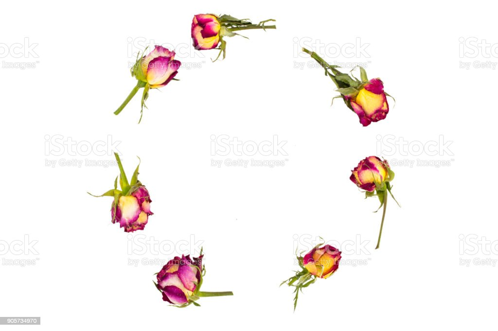 round frame wreath pattern with roses,  flower buds, branches and leaves isolated on white background. flat lay, top view stock photo