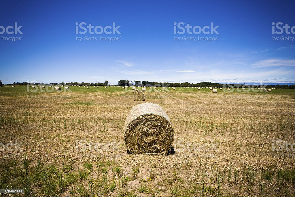 Round hay bale in a field royalty-free stock photo