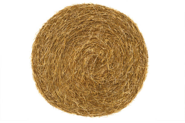 Round hay bale isolated on a white Round hay bale isolated on a white background hay stock pictures, royalty-free photos & images