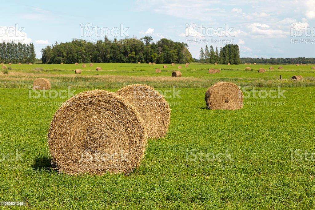 Round Hay Bales stock photo