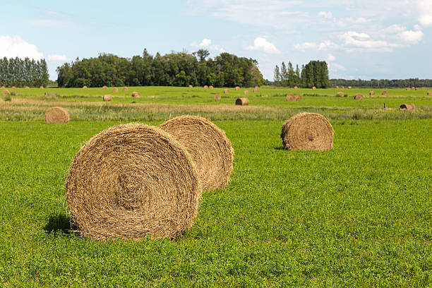 Round Hay Bales stock photo